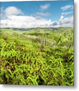 Ferns For Days Metal Print