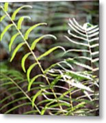 Ferns In Natural Light Metal Print