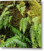 Ferns Metal Print