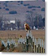 Ferruginous Hawk And Meadowlark Metal Print