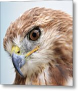 Ferruginous Hawk Metal Print