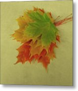 Feuilles D'automne I / Fall Leaves I Metal Print