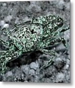 Fiddler Crab - Photosbydm Metal Print