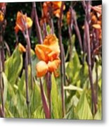 Field For Iris Metal Print