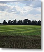 Field Near Coswig Metal Print