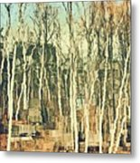 Field Of Birch Metal Print