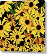 Field Of Black-eyed Susans Metal Print