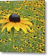 Field Of Coneflowers Metal Print
