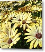 Field Of Daisies Landscape Floral Art Prints Daisy Baslee Troutman Metal Print