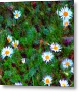 Field Of Daisys  Metal Print
