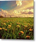 Field Of Dandelions At Sunset Metal Print