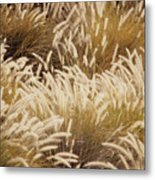 Field Of Feathers Metal Print