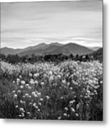 Field Of Flowers In Black And White Metal Print