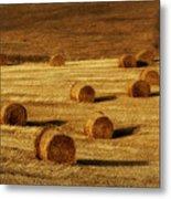 Field Of Gold #1 Metal Print