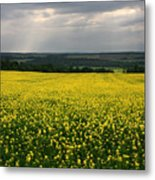 Field Of Gold Sherbrooke Quebec Canada Metal Print