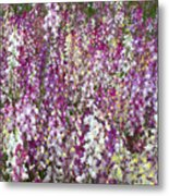 Field Of Multi-colored Flowers Metal Print