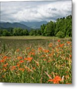 Field Of Orange Daylilies Metal Print