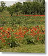 Field Of Poppies On Torcello In Venice Metal Print