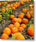 Field Of Pumpkins Card Metal Print