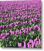 Field Of Purple Flowers Metal Print