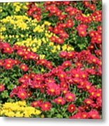 Field Of Red And Yellow Flowers Metal Print