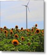 Where The Sunflowers Shine Metal Print