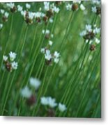 Field Of Tiny Flowers Metal Print