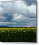 Field Of Weeds Metal Print