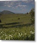 Field Of White Flowers Metal Print