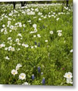 Field Of White Poppies Metal Print