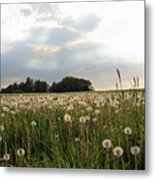 Field Of Wishes Metal Print