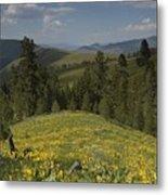 Field Of Yellow Flowers Metal Print