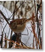 Field Sparrow Metal Print
