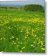 Field With Yellow Flowers Metal Print