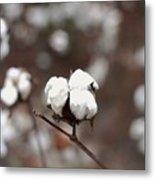 Fields Of Cotton Metal Print