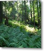 Fields Of Ferns Metal Print
