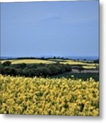 Fields Of Summer Metal Print