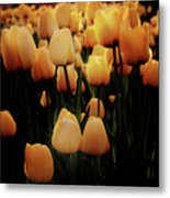 Fields Of Yellow Tulips Metal Print