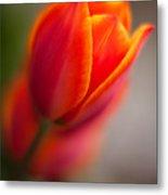 Fiery Tulip Metal Print