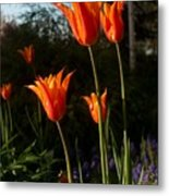 Fiery Tulips Metal Print