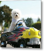 Fifi Goes For A Car Ride Metal Print