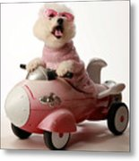 Fifi Is Ready For Take Off In Her Rocket Car Metal Print