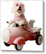 Fifi Is Ready For Take Off  Metal Print by Michael Ledray