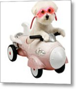 Fifi Loves Her Rocket Car Metal Print