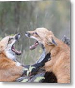 Fight For Dominance Metal Print