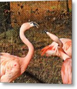Fighting Flamingos Metal Print