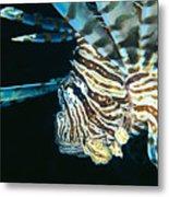 Fiji, Lionfish Metal Print