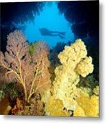 Fiji Underwater Metal Print by Dave Fleetham - Printscapes