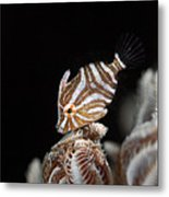 File Fish Metal Print