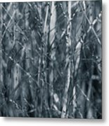 Filigree Veil - Metal Print